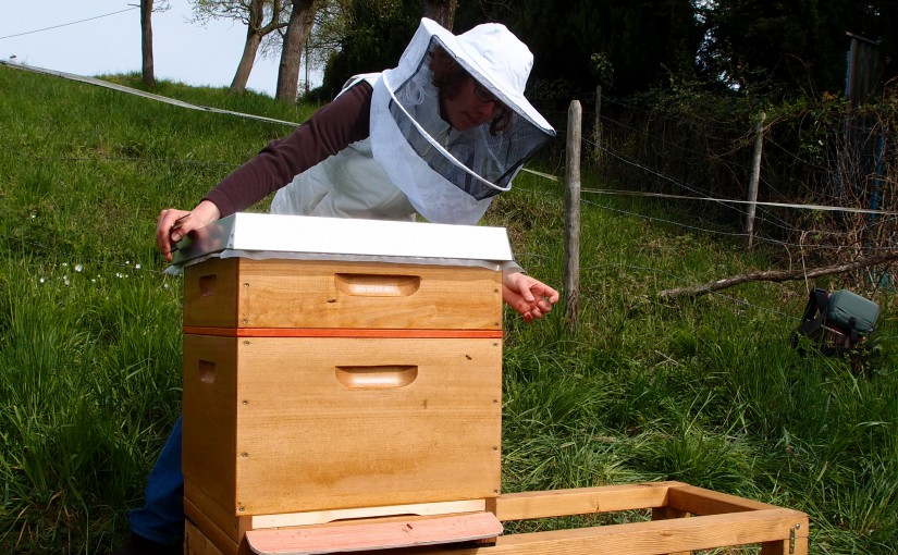 Zum ersten Mal bei den Bienen