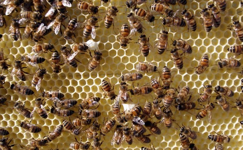 Volk und Ableger erweitern & 2. Honigraum