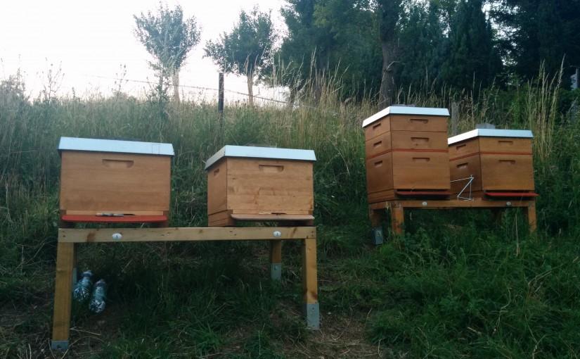 Meine 4 Bienenvölker in Orsberg